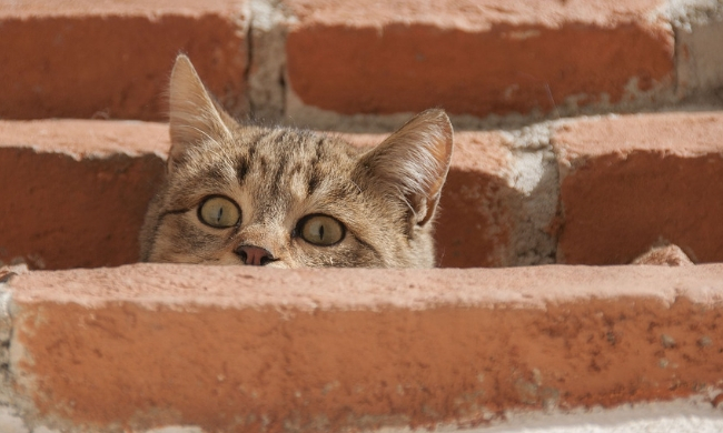 Can An Indoor Cat Survive Outside?