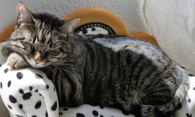How long does it take for a cat to settle into a new home?