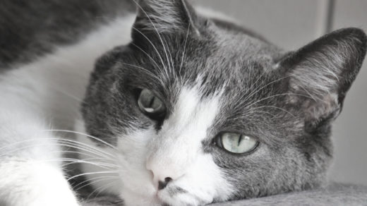 11 Signs to Tell If Your Indoor Cat is Bored