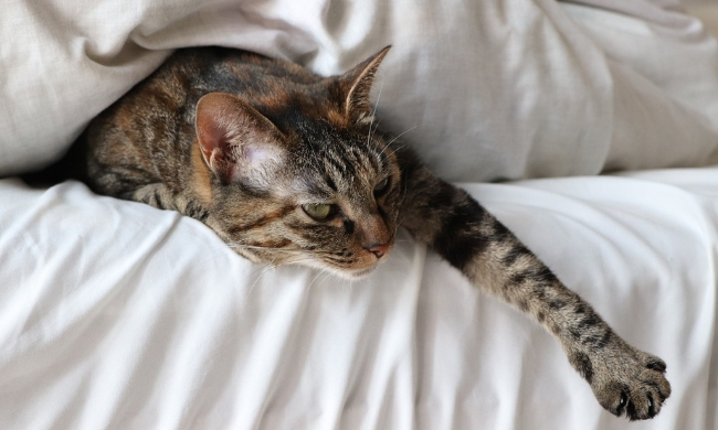 17 Chemical Free Ways to Keep Your House Free of Cat Smells
