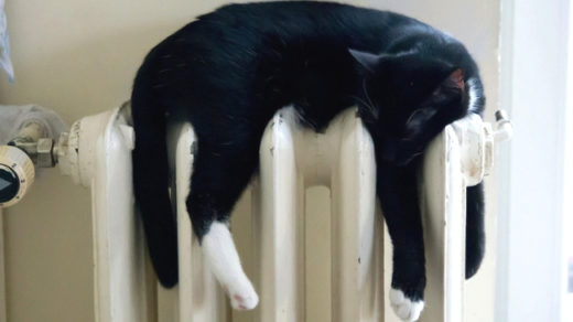 How To Keep My Indoor Cat Warm During Winter