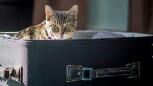 How To Move House with an Indoor Cat