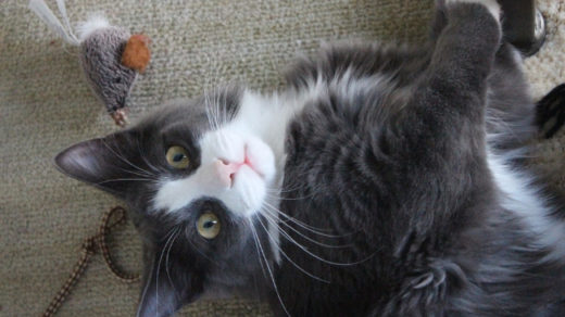 26 Ways to Exercise an Indoor Cat & Have Fun