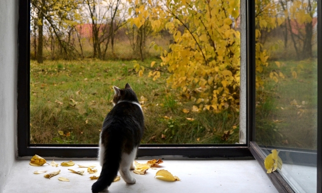 The Benefits of Letting Your Indoor Cat Go Outside Safely