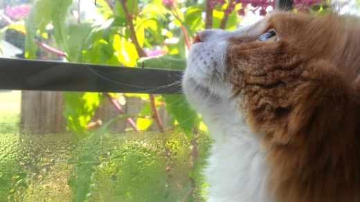 15 Things To Do Before Letting Your Indoor Cat Outside For The First Time