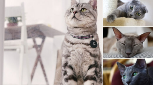 best indoor cat breeds for first time owners