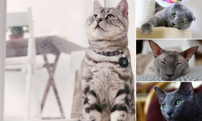 9 Of The Best Indoor Cat Breeds For First Time Owners Indoor Cat Mom