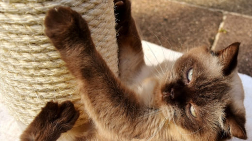 25 ways to keep your indoor cat entertainment and Happy