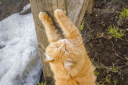 Top Reasons Why A House Cats Claws Keep Hooking On Things