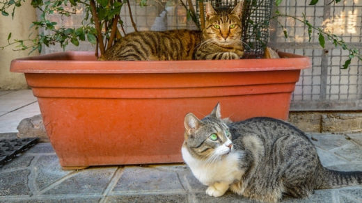 7 Safe & 5 Dangerous Ways to Stop Cats From Pooping In Your House Plants