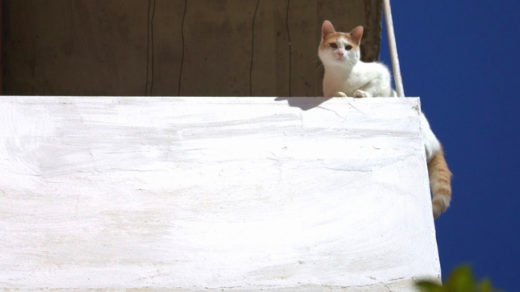 How to Keep Indoor Cats Jumping Off Your Balcony