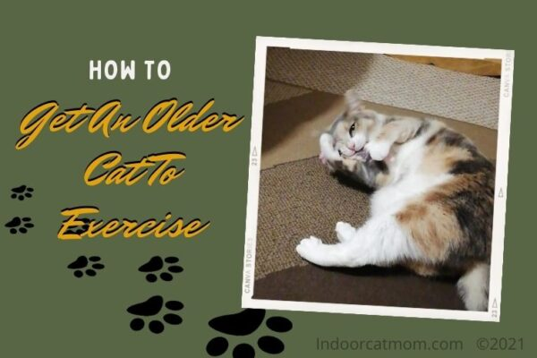 How To Get An Older Cat To Exercise And Have Fun
